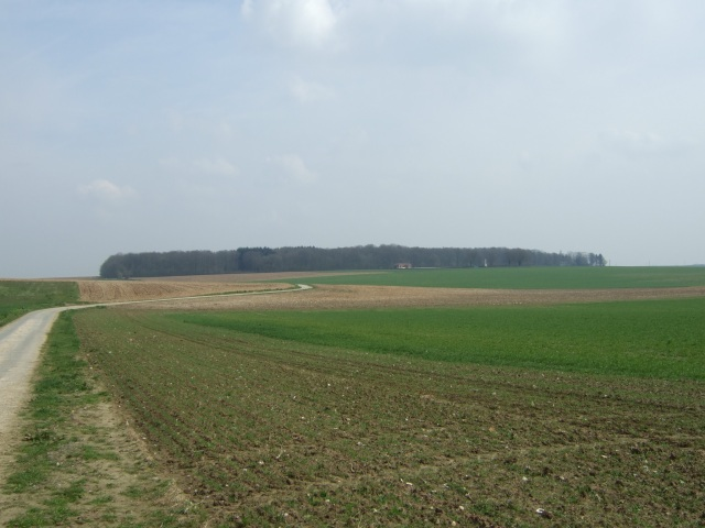 View towards High Wood along the lane where the 1st Queen's formed up